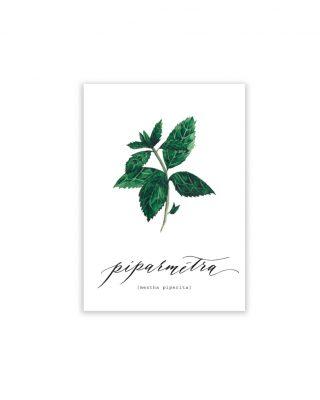 Kartīte Piparmētra, Mentha Piperita