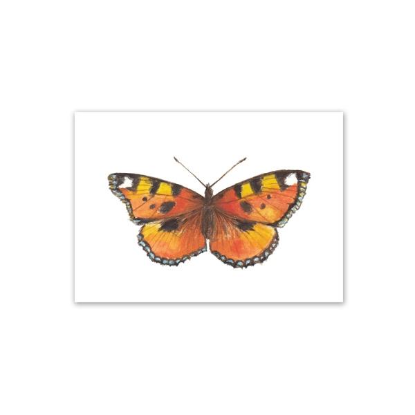 Kartīte, Butterfly2