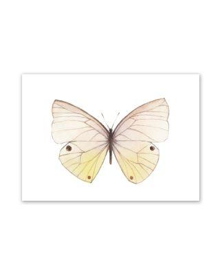 Kartīte, Butterfly1